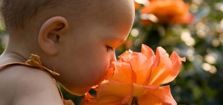 Mẹ cho bé ngửi hương thơm của các loại hoa để phát triển khứu giác.